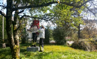 Intervention de récupération d'un essaim d'abeilles