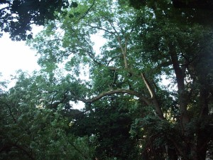 Prévention Arbre Grand-Bay 2005